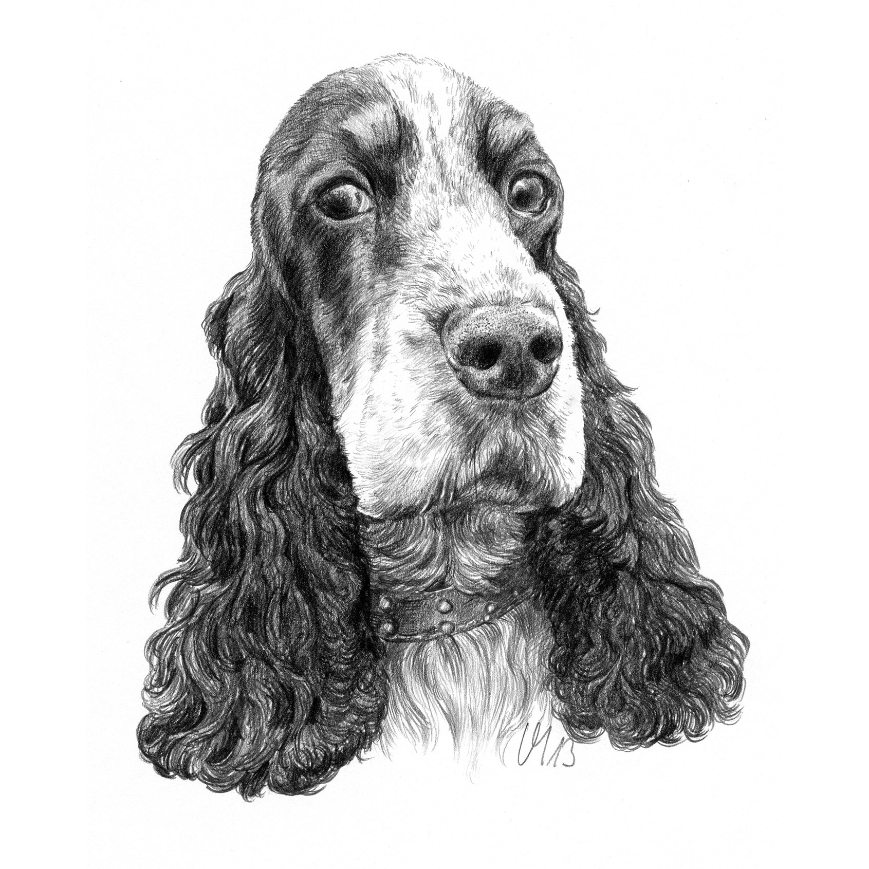 Hundeportrait Cocker Spaniel