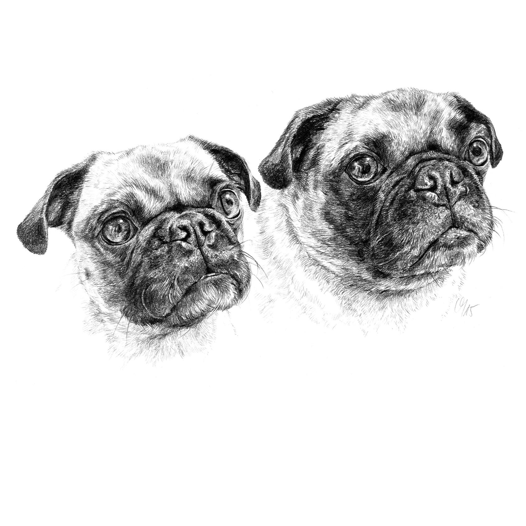 Hundeportrait zwei Möpse