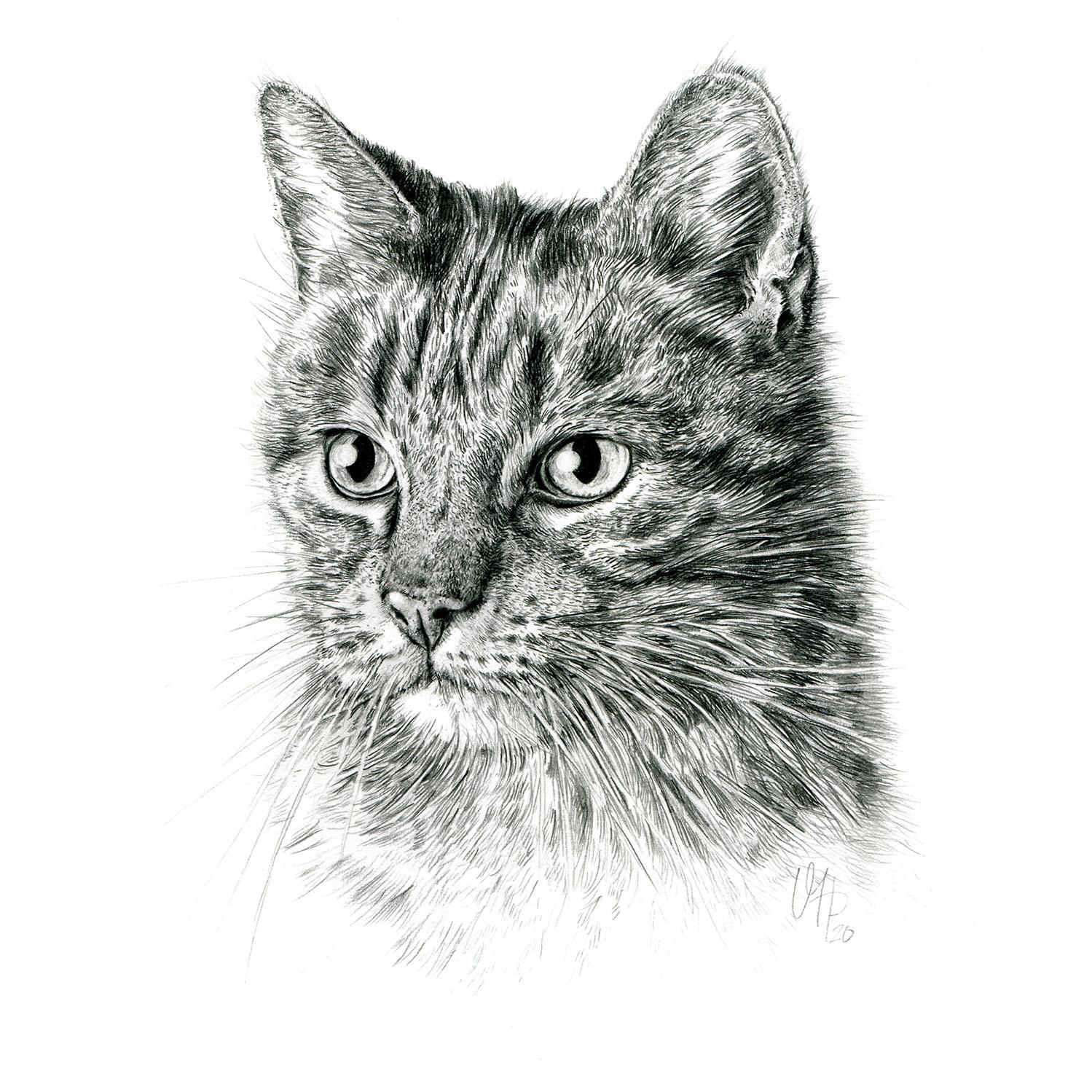Katzenportrait Hauskatze