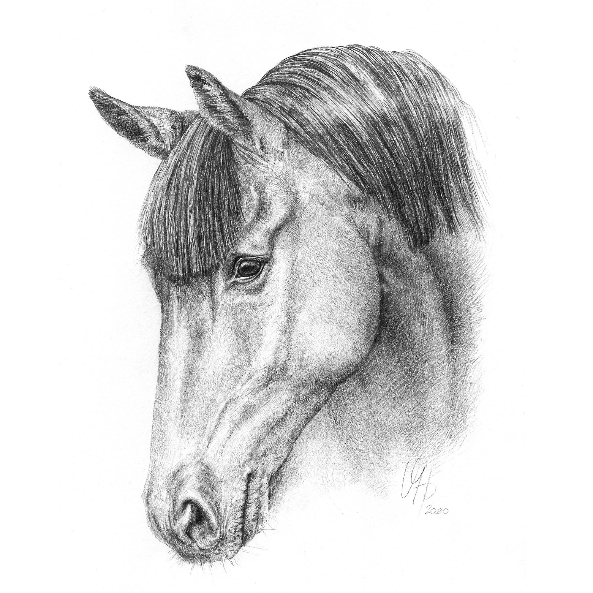Pferdeportrait Hannoveraner Stute