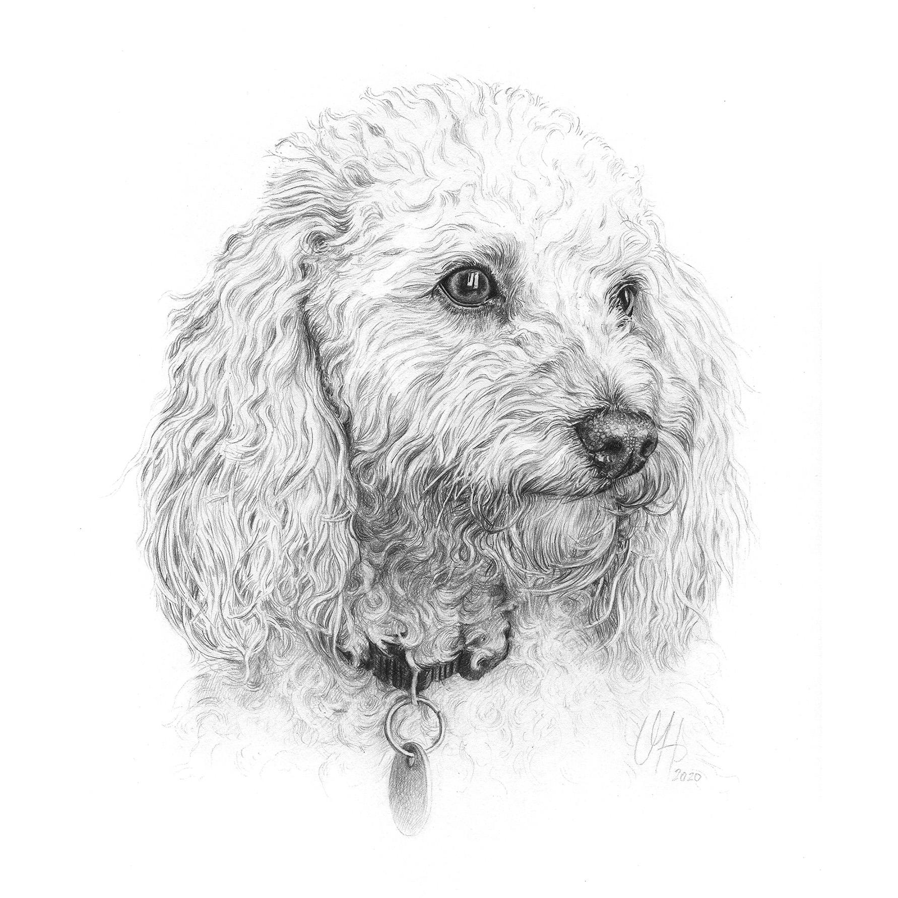 Hundeportrait Pudel