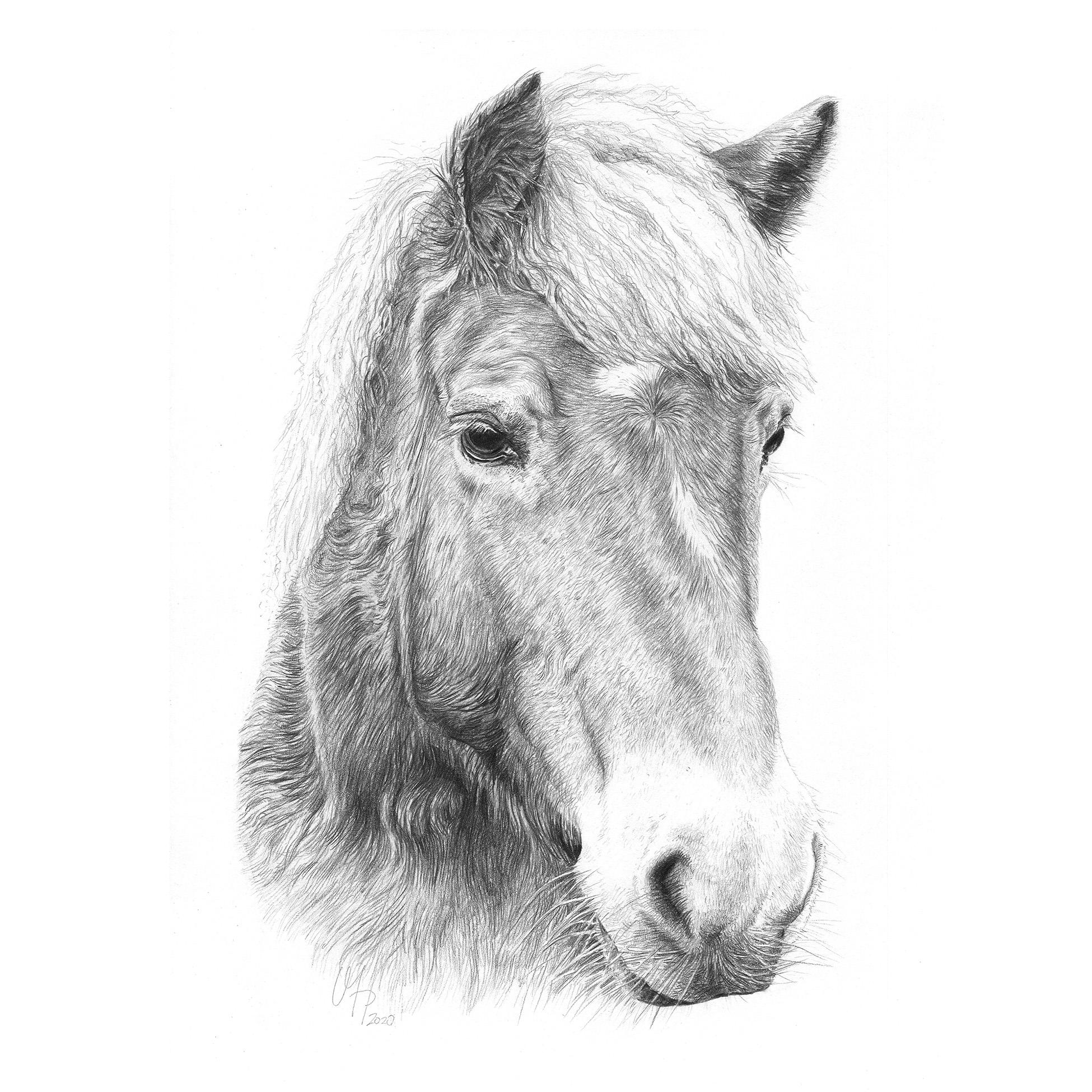 Pferdeportrait Haflinger Stute