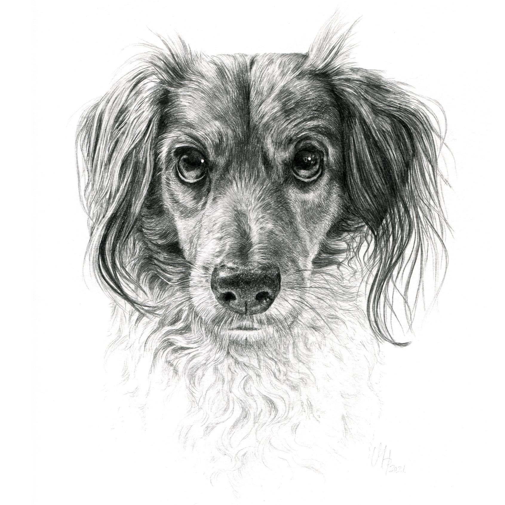 Hundeportrait Mischling, Kooikerhondje