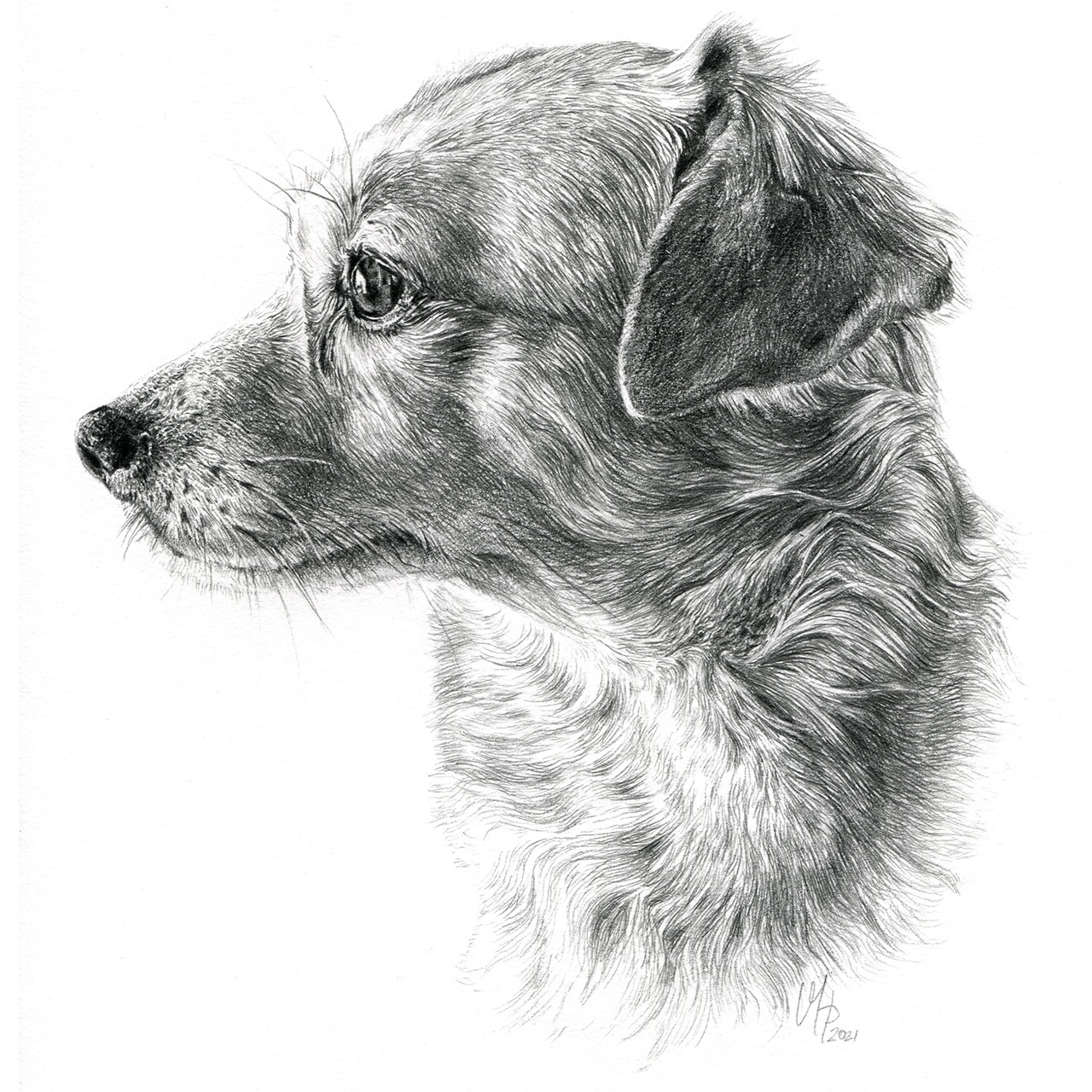 Hundeportrait Mischling-Hündin