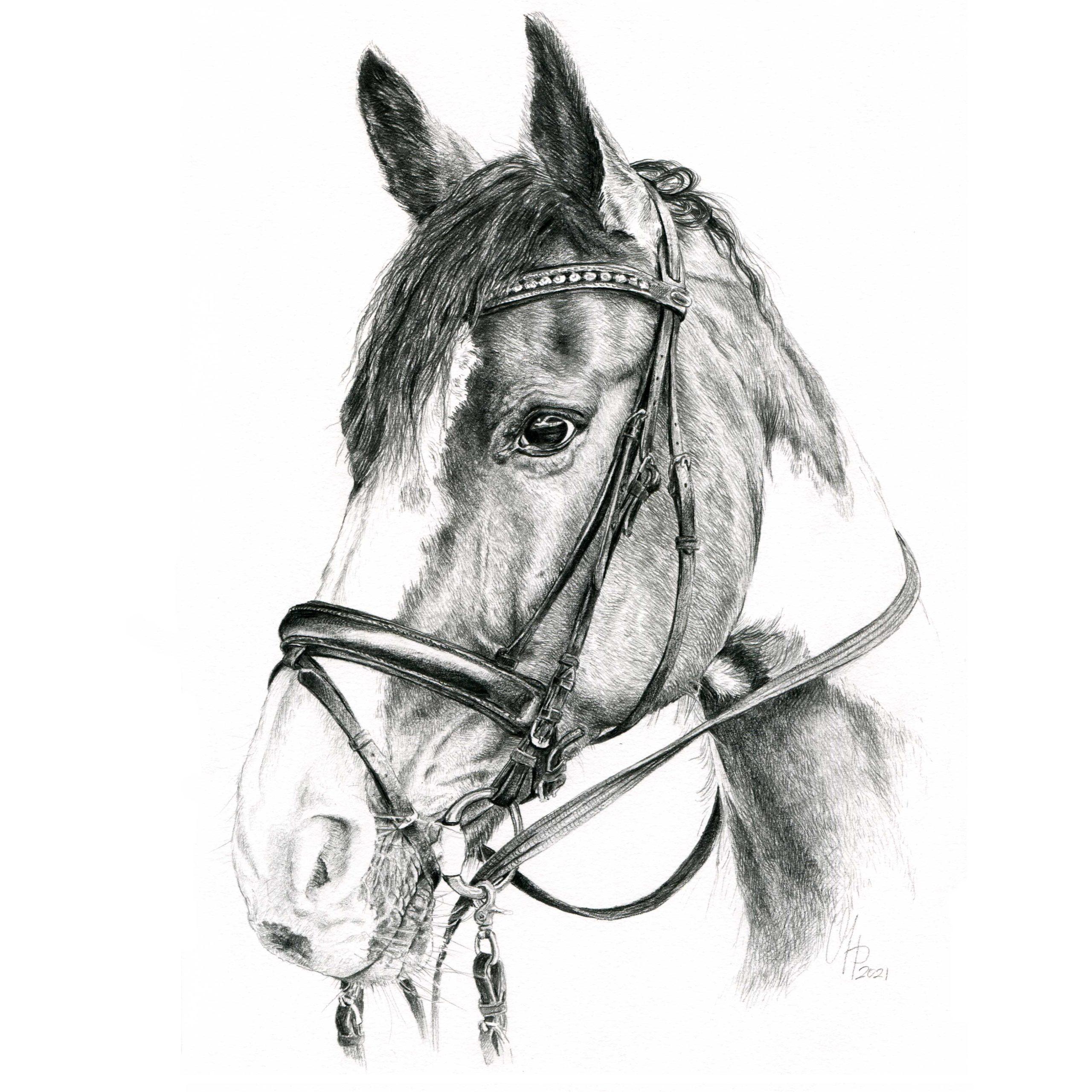 Pferdeportrait Holsteiner Stute